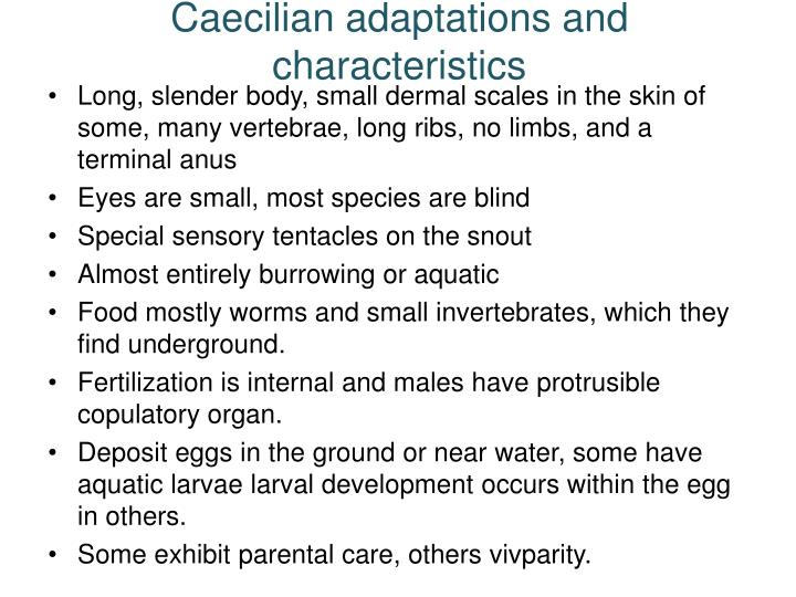 Caecilian adaptations and characteristics