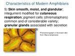 characteristics of modern amphibians4