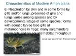characteristics of modern amphibians5