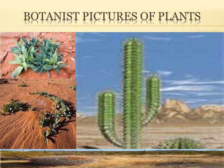 Botanist pictures of plants