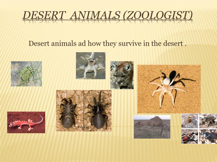 Desert animals ad how they survive in the desert .