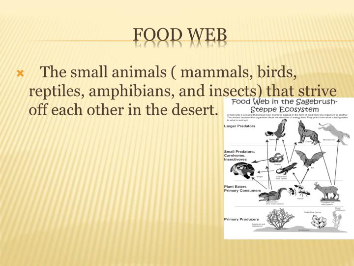 The small animals ( mammals, birds, reptiles, amphibians, and insects) that strive off each other in the desert.