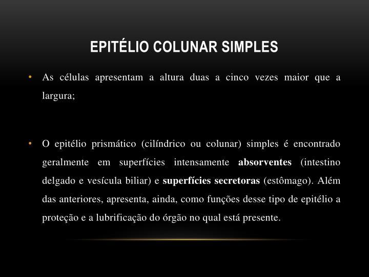 Epitélio colunar simples