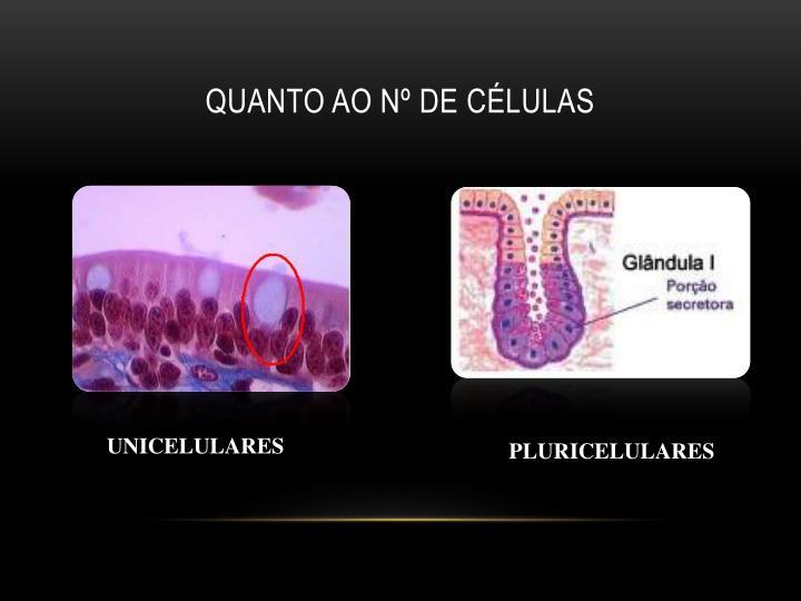 Quanto ao nº de células