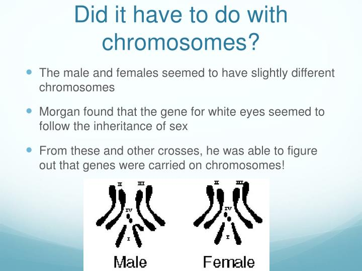 Did it have to do with chromosomes?