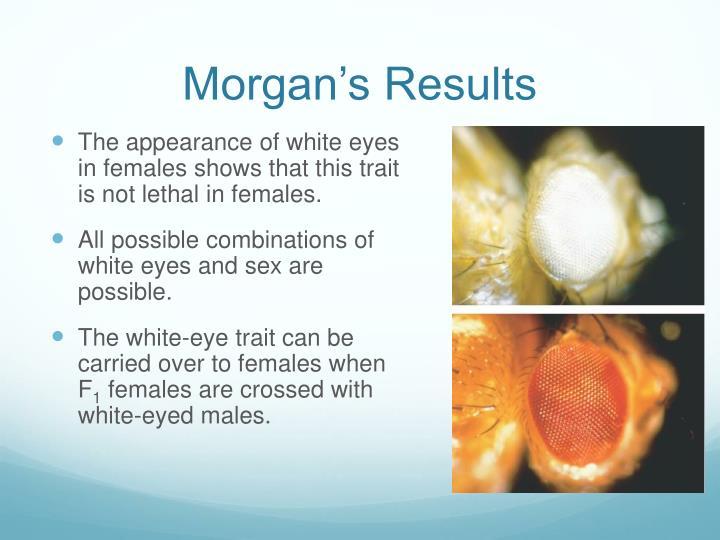 Morgan's Results