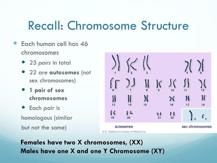 Recall: Chromosome