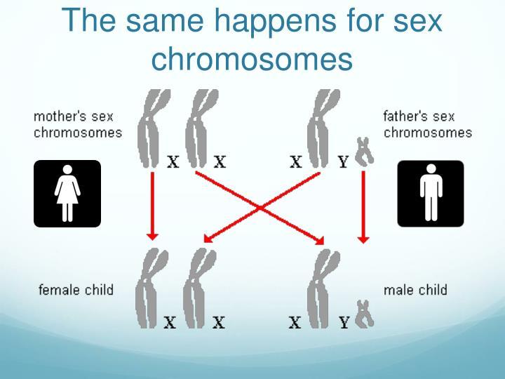 The same happens for sex chromosomes