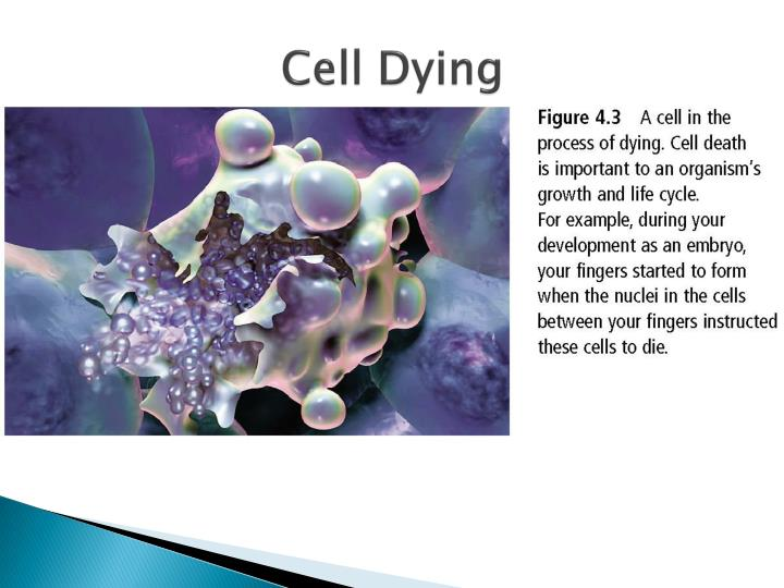 Cell Dying