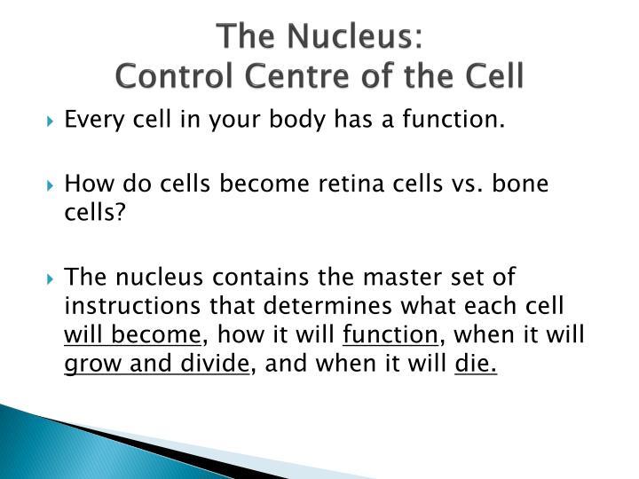 The Nucleus: