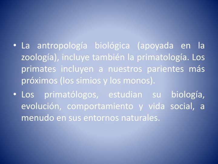 La antropología biológica (apoyada en la zoología), incluye también la primatología. Los primates incluyen a nuestros parientes más próximos (los simios y los monos).