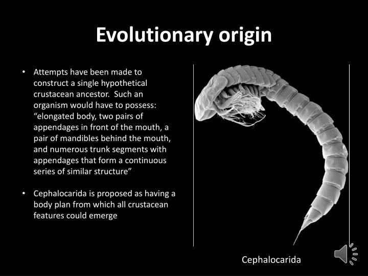 Evolutionary origin