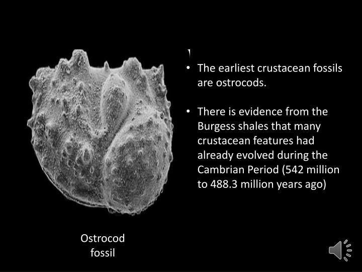 The earliest crustacean fossils are