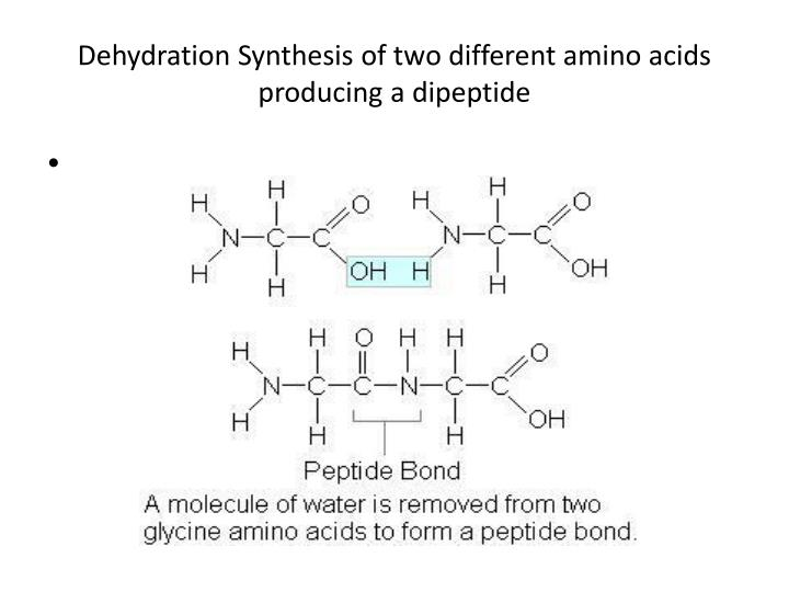 Dehydration Synthesis of two different amino acids producing a dipeptide