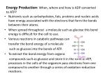 energy production when where and how is adp converted to atp