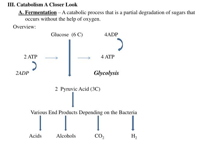 III. Catabolism A Closer Look