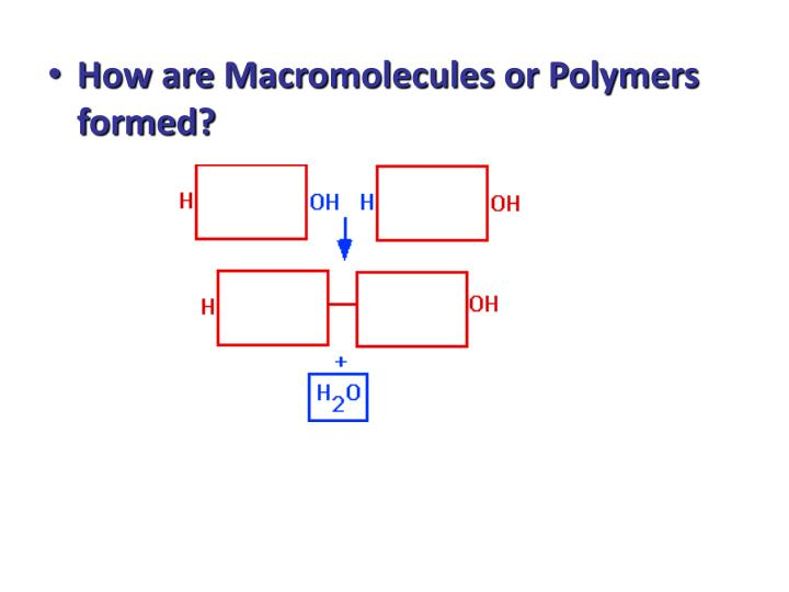 How are Macromolecules or Polymers formed?