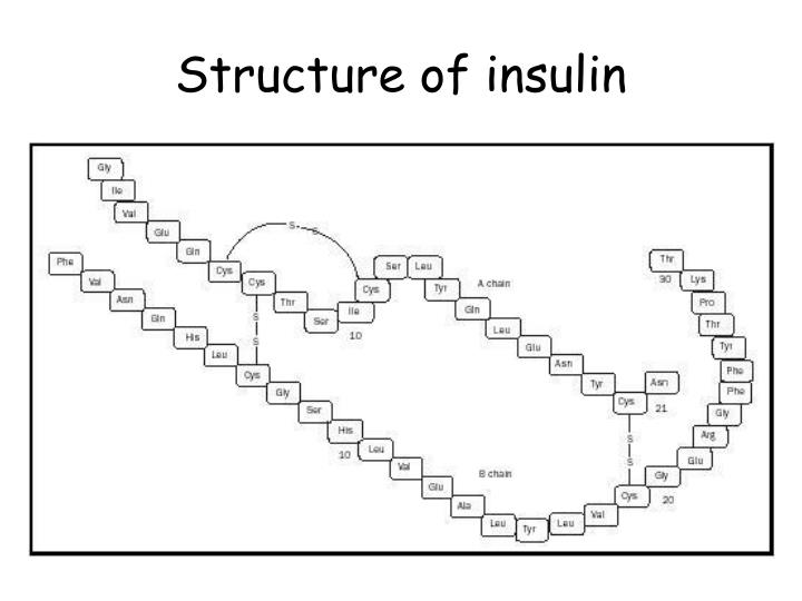 Structure of insulin