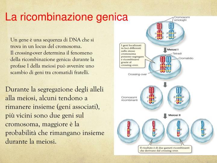 La ricombinazione genica
