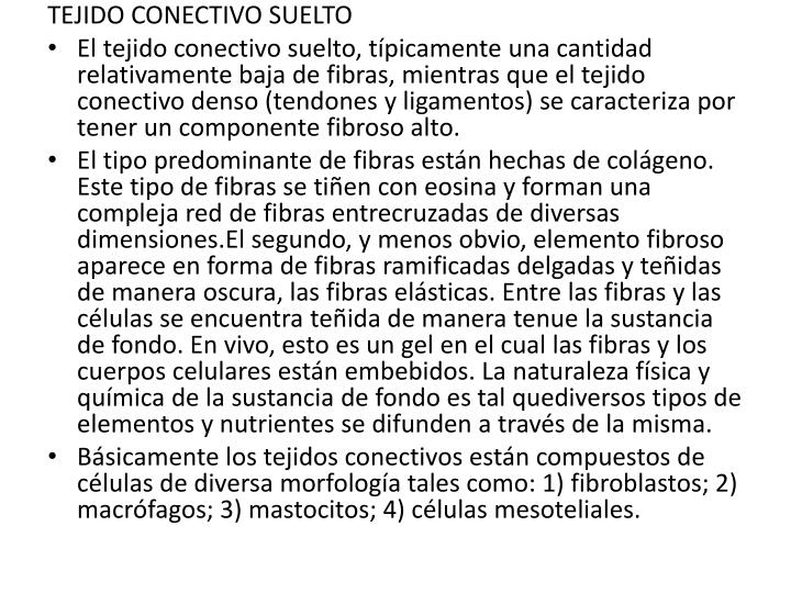 TEJIDO CONECTIVO SUELTO