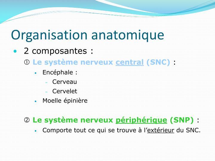 Organisation anatomique