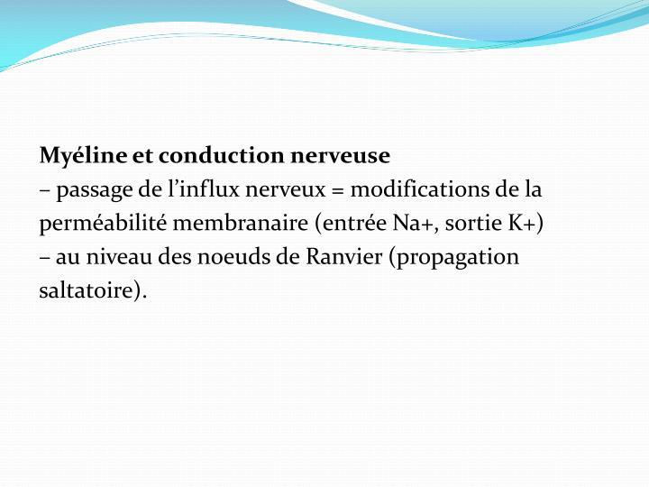 Myéline et conduction nerveuse