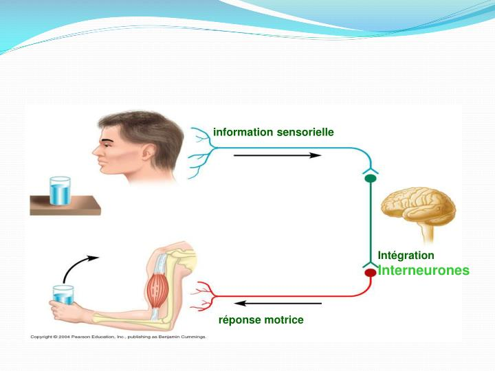 information sensorielle