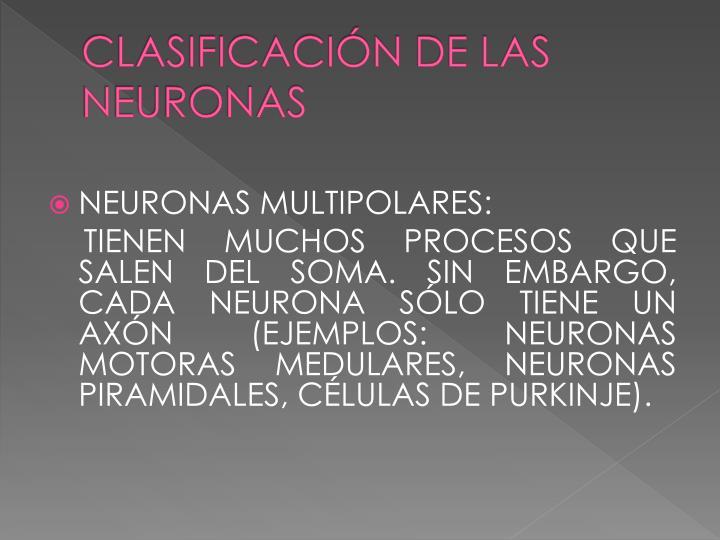 CLASIFICACIÓN DE LAS NEURONAS