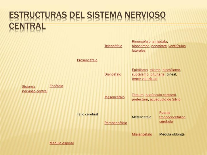 Estructuras del Sistema Nervioso Central