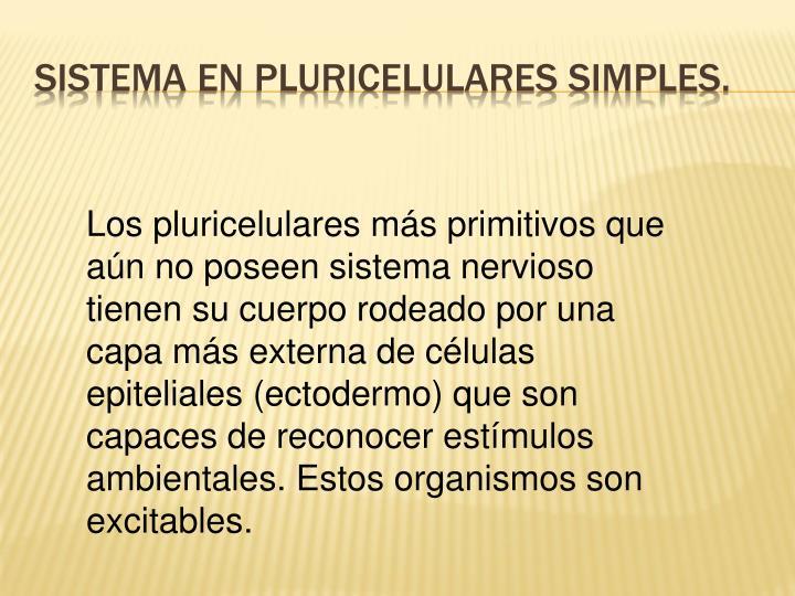 Sistema en pluricelulares simples.