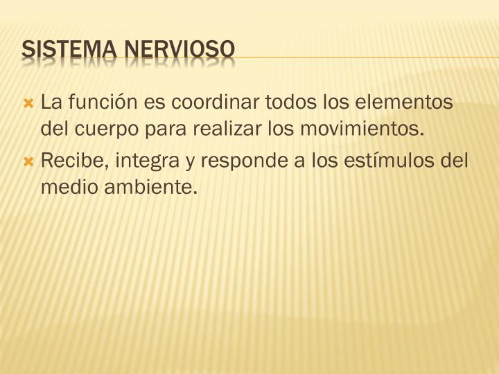 La función es coordinar todos los elementos del cuerpo para realizar los movimientos.