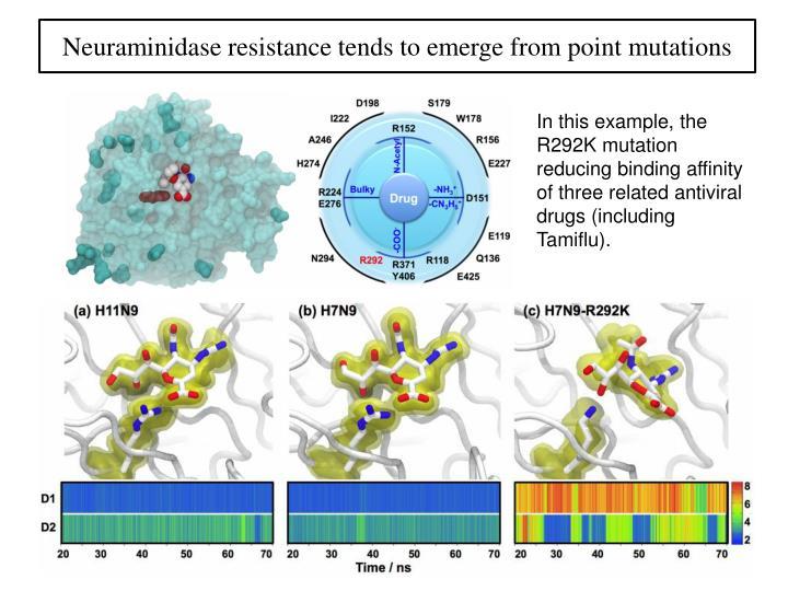 Neuraminidase
