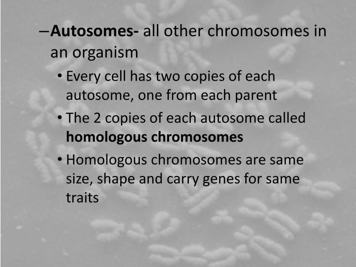 Autosomes-