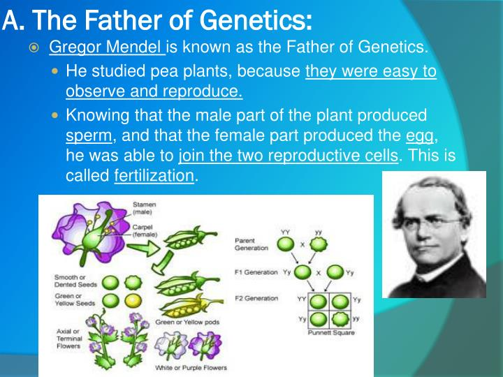 A. The Father of Genetics: