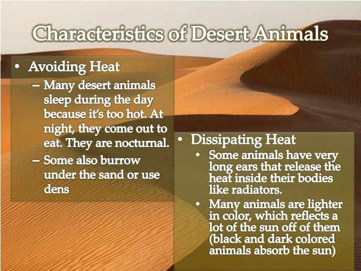 Characteristics of Desert Animals
