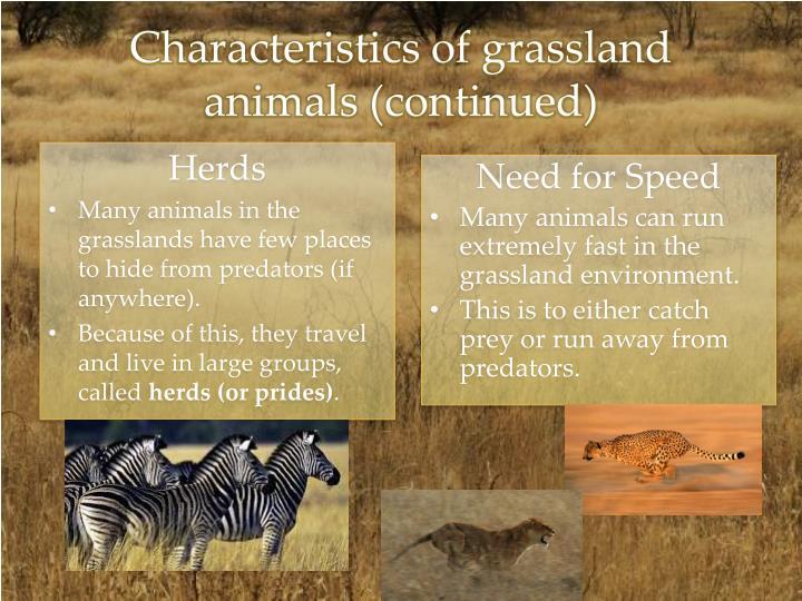 Characteristics of grassland