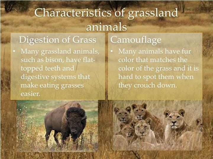 Characteristics of grassland animals
