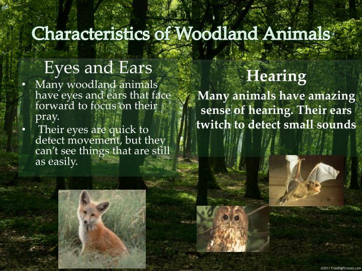 Characteristics of Woodland Animals