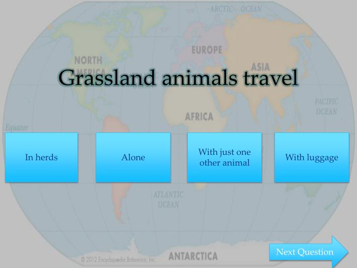 Grassland animals travel