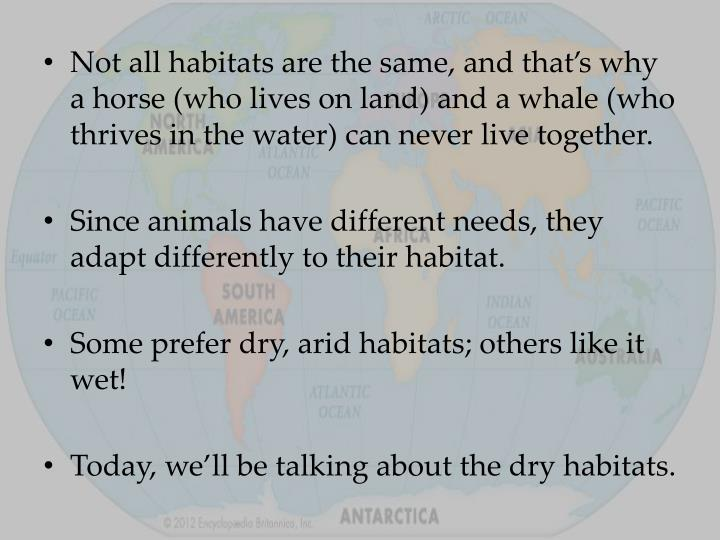 Not all habitats are the same, and that's why a horse (who lives on land) and a whale (who thrives in the water) can never live together.