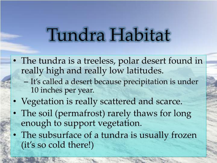 Tundra Habitat