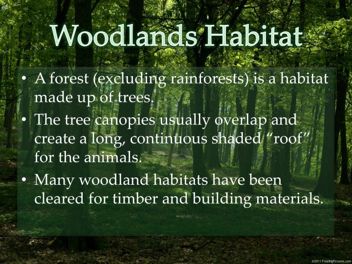 Woodlands Habitat