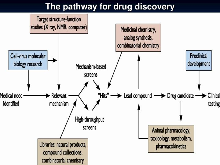 The pathway for drug discovery