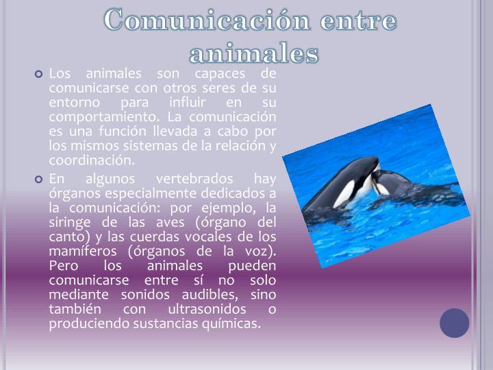 Comunicación entre