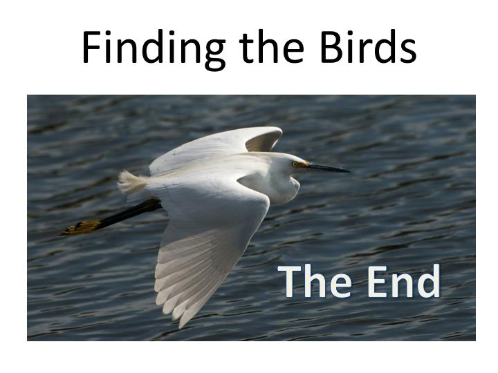 Finding the Birds