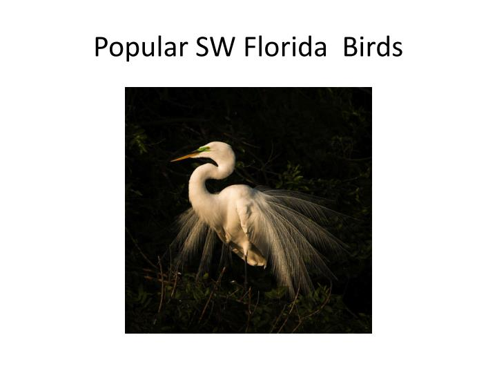 Popular SW Florida  Birds