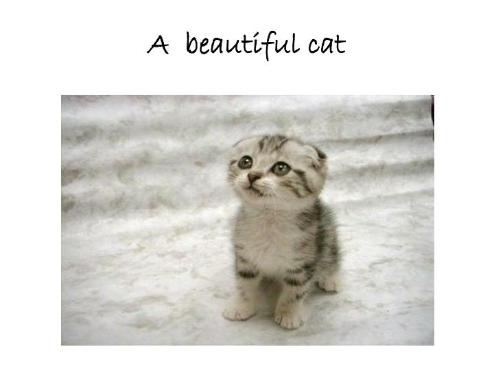 A  beautiful cat