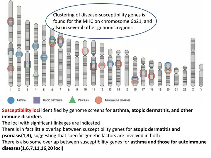 Clustering of disease-susceptibility genes is found for the MHC on chromosome 6p21, and also in several other genomic
