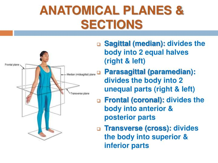 ANATOMICAL PLANES & SECTIONS