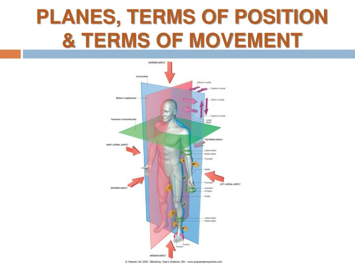PLANES, TERMS OF POSITION & TERMS OF MOVEMENT